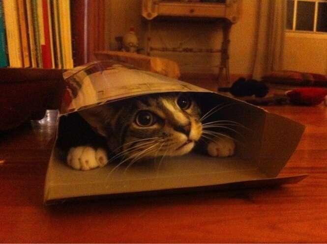 Veja imagens de gatos improvisando camas para tirar um cochilo