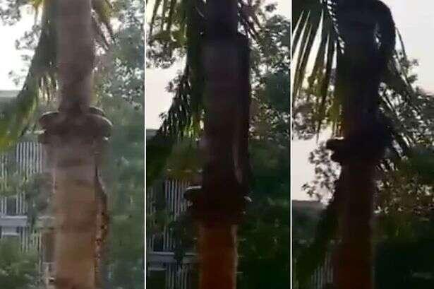 Vídeo mostrando cobra subindo em árvores se torna viral na web