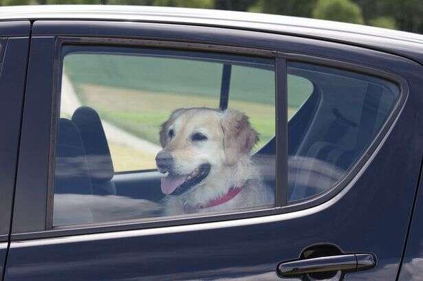 Policial prende mulher dentro de seu próprio carro após ela ter feito o mesmo com seu cão de estimação