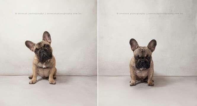 Fotos divertidas de cães antes e depois do banho