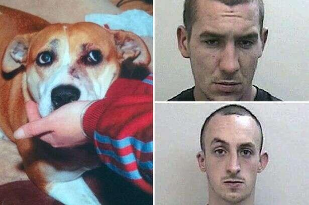 Cão é esfaqueado após tentar proteger seus donos
