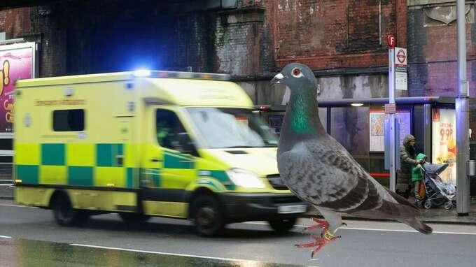 Paramédica corre para socorrer vítima e descobre que paciente na verdade era um pombo