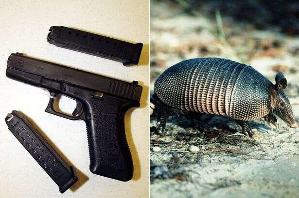 Homem atira em tatu, bala ricocheteia no casco do animal e acerta sua sogra