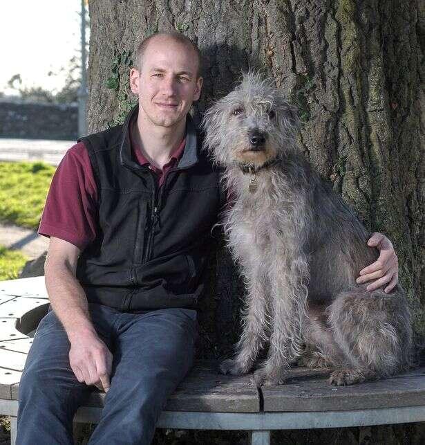 Cão começa a tropeçar ao ingerir drogas alucinógenas durante passeio