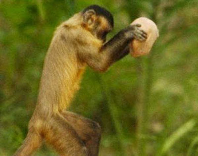 macaco atirar tijolo em cabeça de adolescente, que faleceu após o incidente