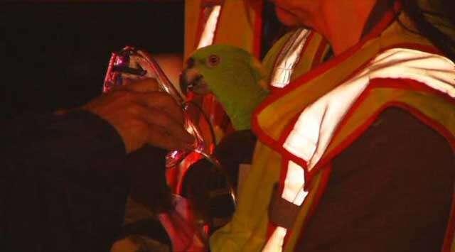 Bombeiros escutam pedido de socorro em incêndio de residência e ao chegar descobrem que eram papagaios