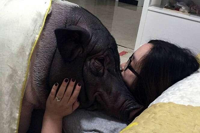 Mulher se torna sensação na internet após imagem dela dormindo com seu porco