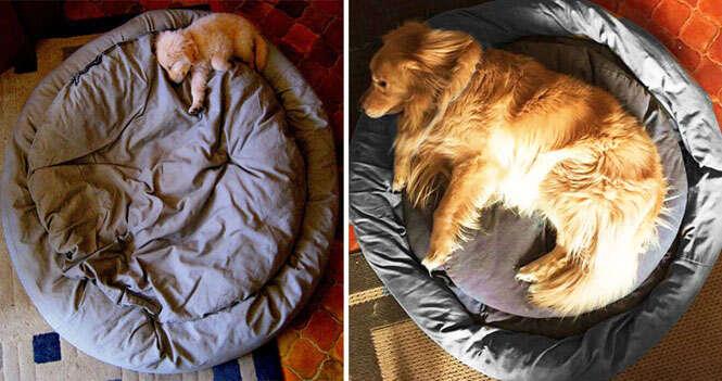 Antes e depois dos animais de estimação
