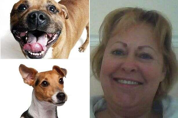 Cães comem corpo de sua dona morta dentro de casa