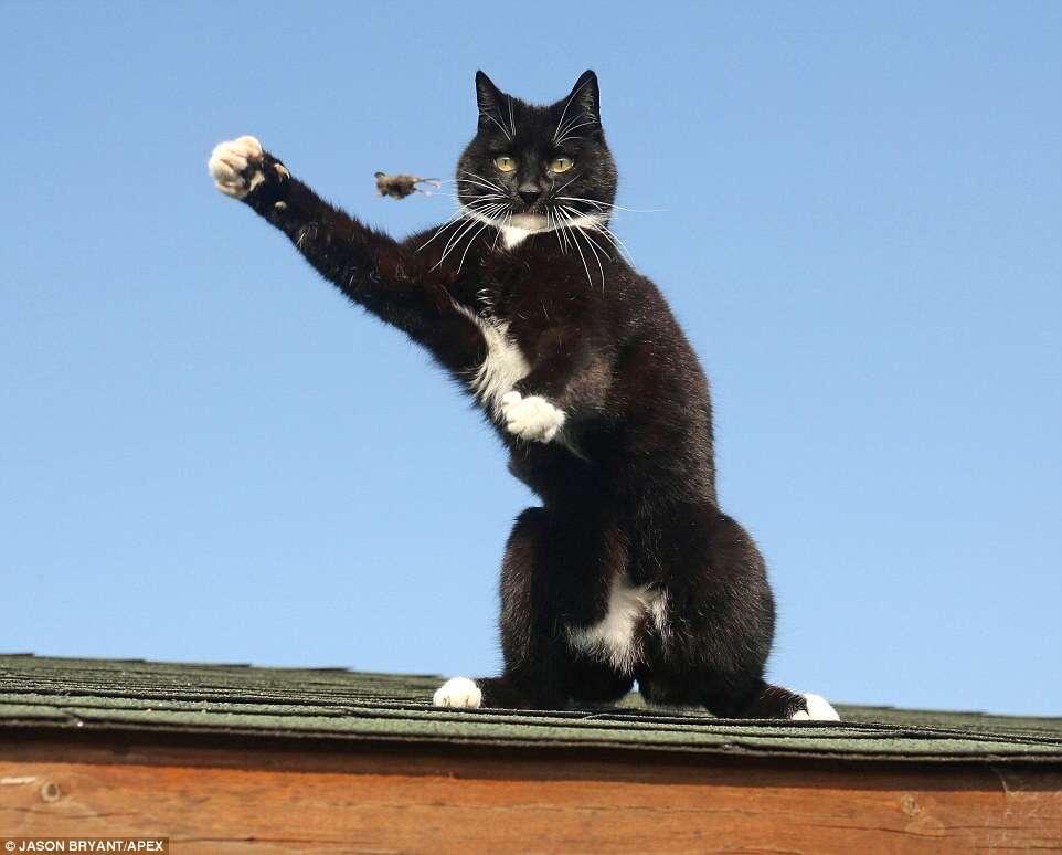 Imagens incríveis flagram gato brincando com rato em cima de telhado na Inglaterra