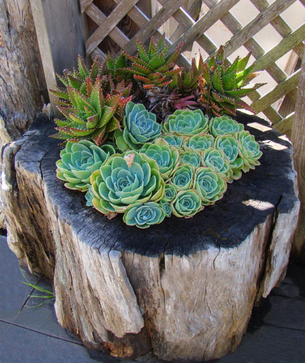 12 maneiras de transformar troncos de rvore em vasos para flores. Black Bedroom Furniture Sets. Home Design Ideas