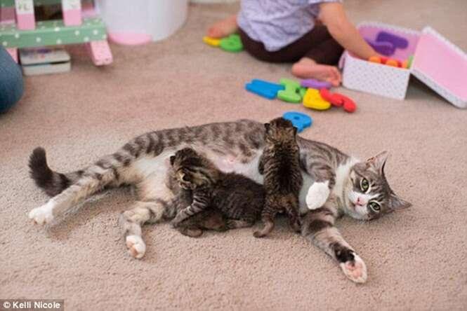 Gata que entrou em depressão após morte de seus filhotes adota três novos gatinhos