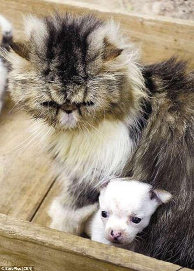 Proprietária fica chocada após sua gata dar à luz um cão