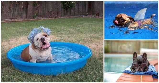 Cães que só querem relaxar à beira da piscina