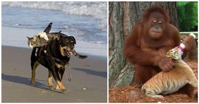 Animais que são babás de outros animais