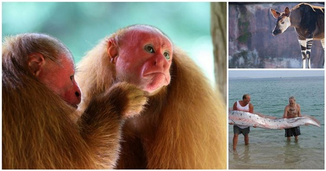 Animais reais que têm aparência estranha