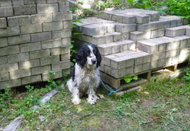 Cadela cega é deixada para morrer após ser abandonada amarrada