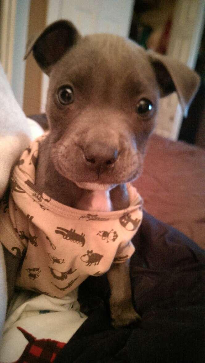 Cães muito fofos vestindo seus pijamas