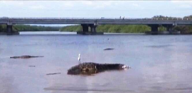 Menino de sete anos é comido vivo por crocodilo