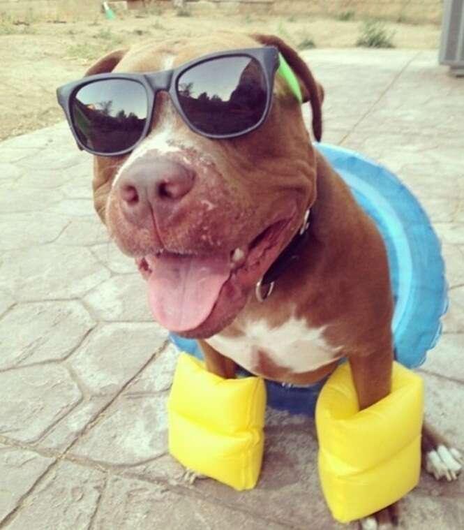 Cães que adoram o verão