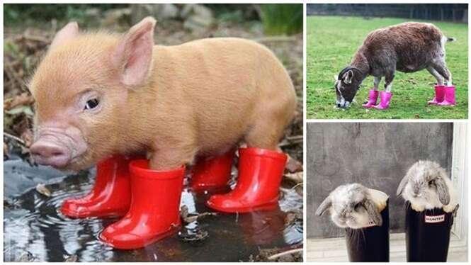 Animais engraçados com suas galochas de chuva
