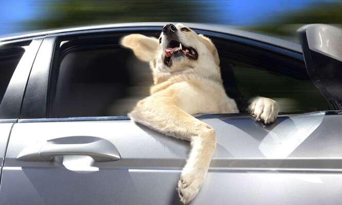 Os cães mais felizes por passearem de carro