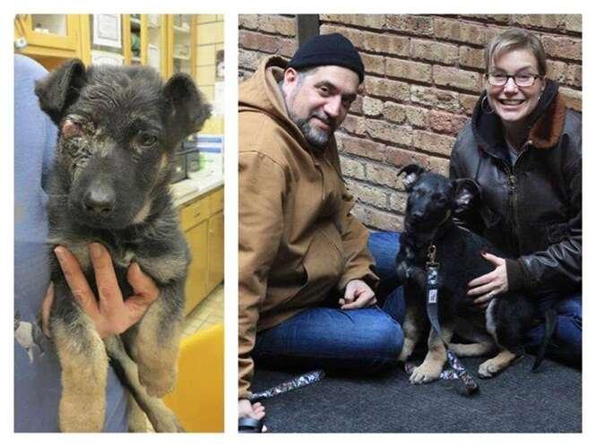 Cães que sofreram mudanças inacreditáveis após serem resgatados
