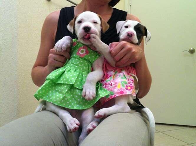 Veja os animais que mostram as últimas tendências de moda para os pets