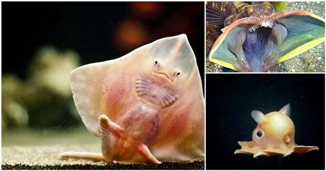 Criaturas incríveis que não parecem ser deste planeta