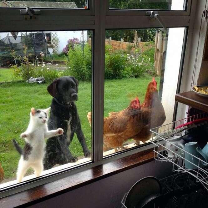Animais presos do lado de fora de casa