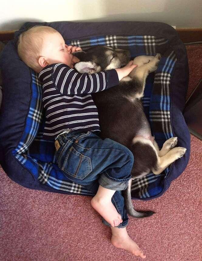 Amizade entre bebês e cães