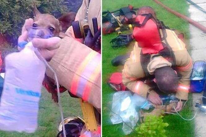 Imagem comovente mostra momento em que bombeiro salvou cão em incêndio