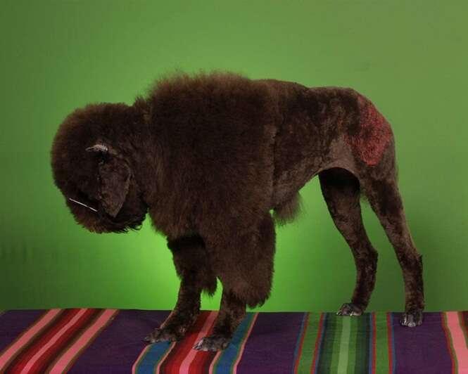 Cachorros hilários que se parecem com outros animais