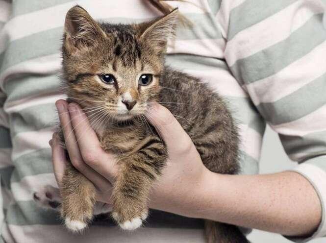 De acordo com pesquisa, gatos de estimação em casa fazem crianças terem baixo rendimento na escola