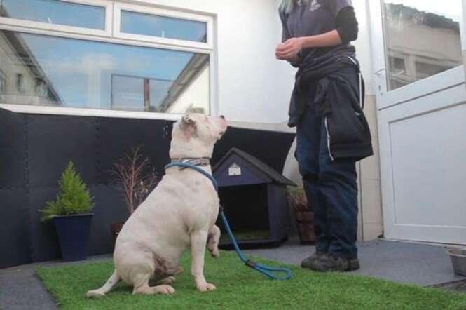 Cão abandonado por ser surdo aprende língua de sinais