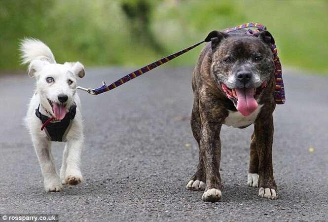 Cachorro cego e seu cão-guia são encontrados abandonados