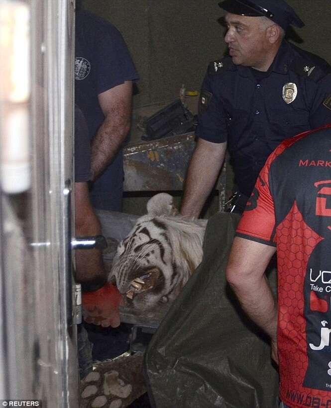 Forte chuva faz animais escaparem de zoológico Na Geórgia
