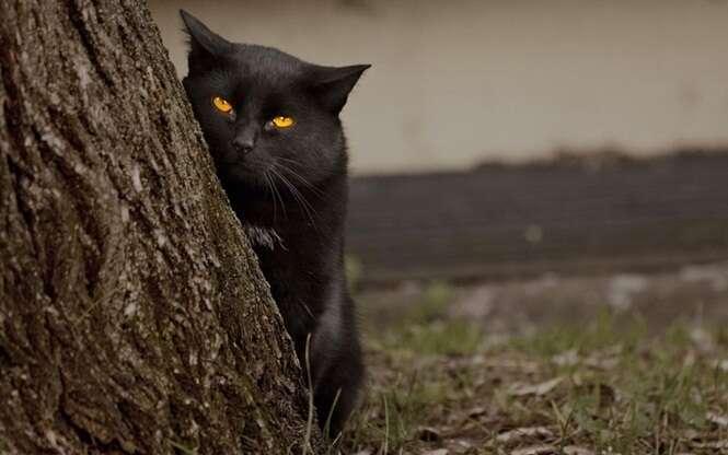 Gatos mais malignos que você já viu