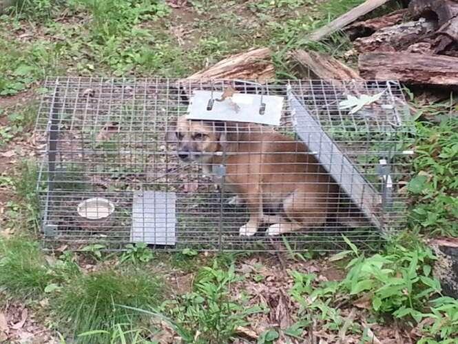 Mulher monta armadilha para capturar gambá e acaba capturando seu próprio cão