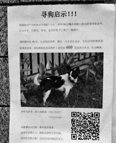 Idosa oferece casa como recompensa para quem encontrar seu cão
