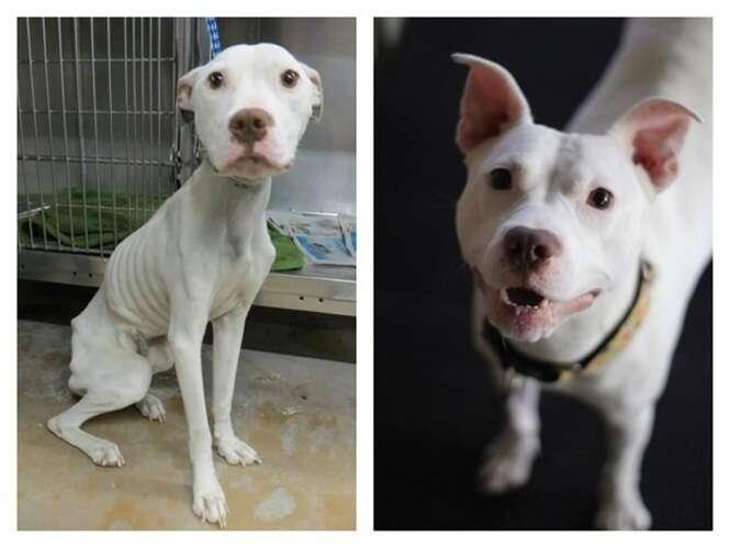 Imagens incríveis de cães antes e depois de serem resgatados em condições desumanas