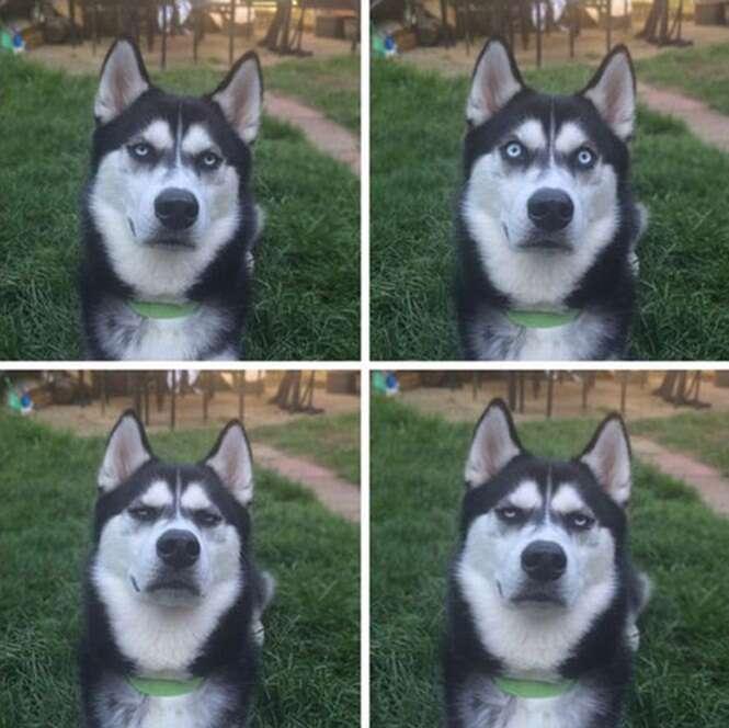 Reação de cão ao perceber que sua dona o traiu se torna viral na web