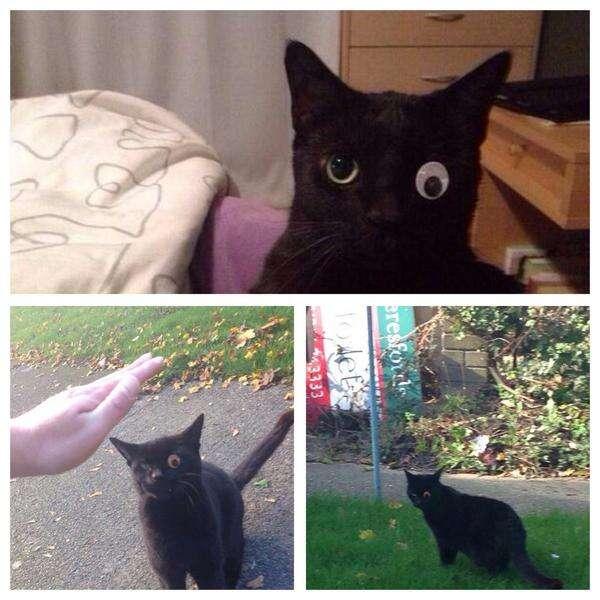 Dono coloca olho de brinquedo em gato após animal ficar cego e imagem repercute na web