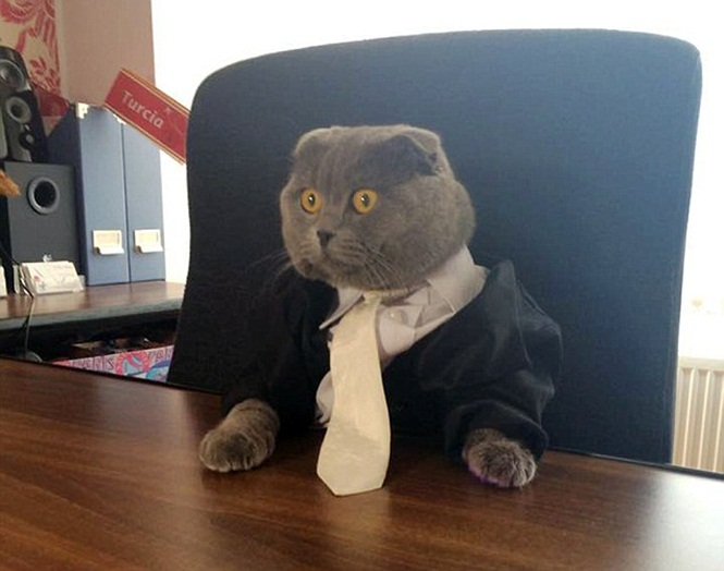 Company Hires Cat As Communication Director