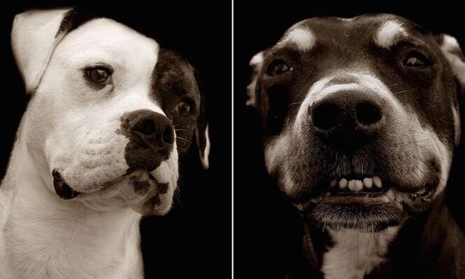 Imagens comoventes registram cães a espera de adoção