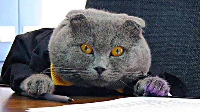 Gato é contratado como diretor de comunicações de empresa