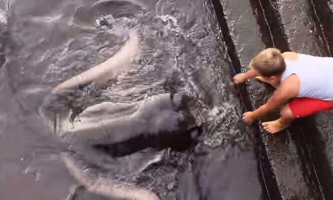 Menino é surpreendido por criatura enorme enquanto alimentava peixes