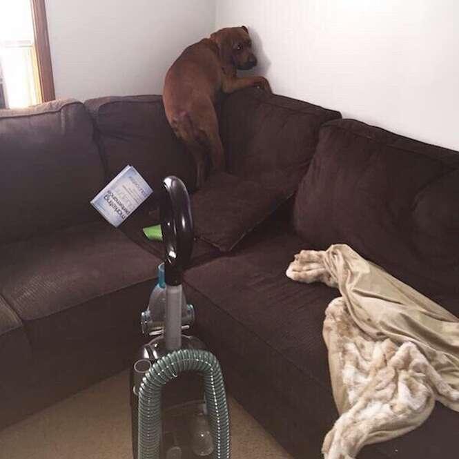 Cães que estão completamente apavorados