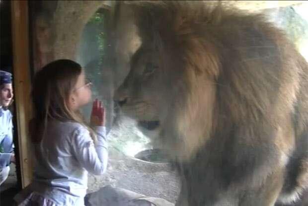 Vezes em que valeu a pena visitar um zoológico