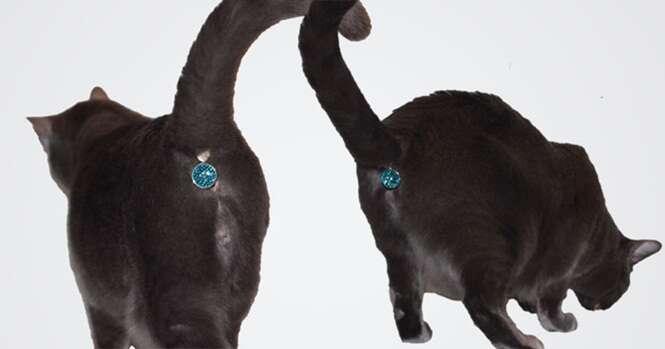 Empresa cria joia que tampa traseiro de gatos